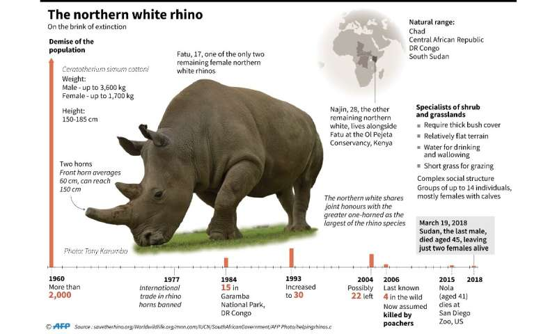 The northern white rhino is on the brink of extinction