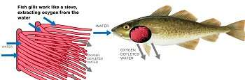Theory explains biological reasons that force fish to move poleward