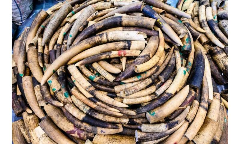 The smuggling and sale of ivory is a multi-billion-dollar industry