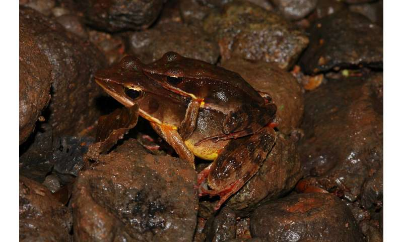 The truth about a true frog: Unknown Costa Rican frog hidden amongst a widespread species