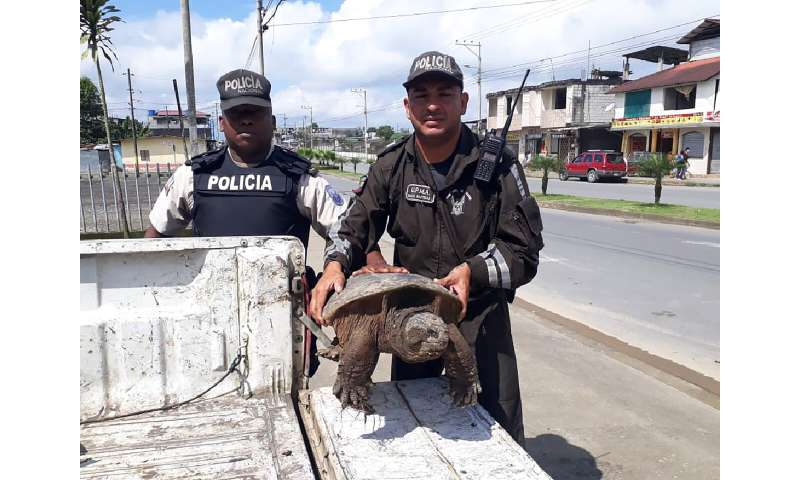 Thousands of endangered animals seized in customs operation