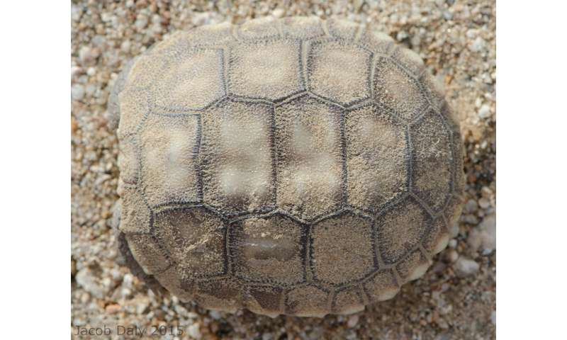 Tweaking the approach to save the desert tortoise