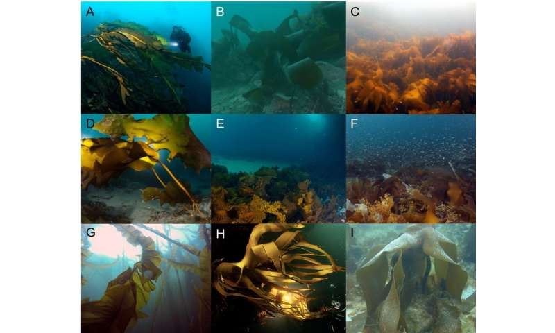 Underwater Arctic forests are expanding with rapid warming