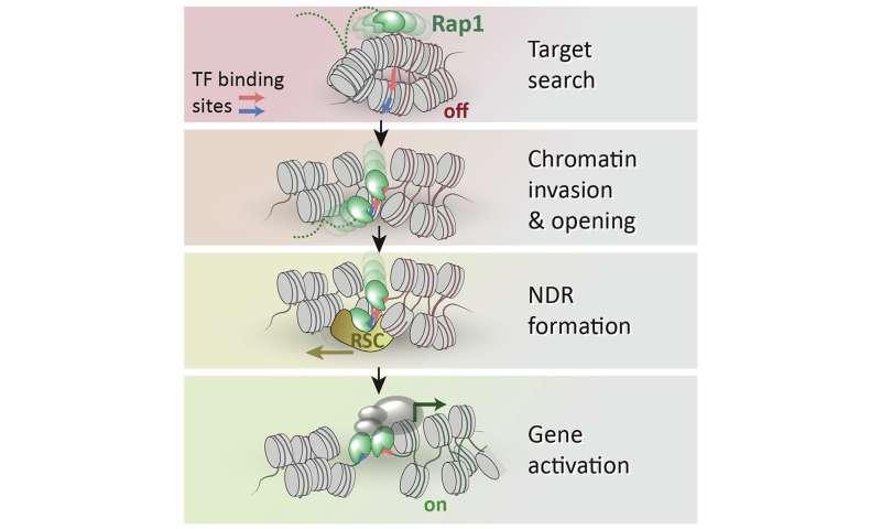 Unraveling gene expression