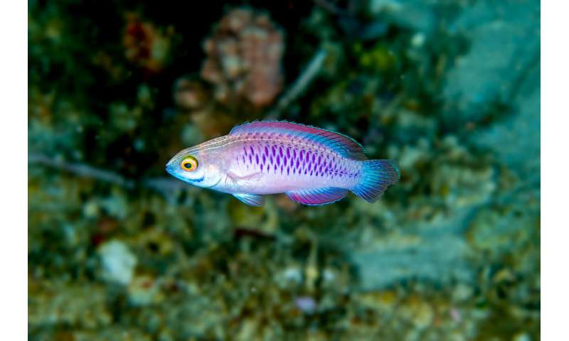 Wakanda forever! Scientists describe new species of 'twilight zone' fish from Africa