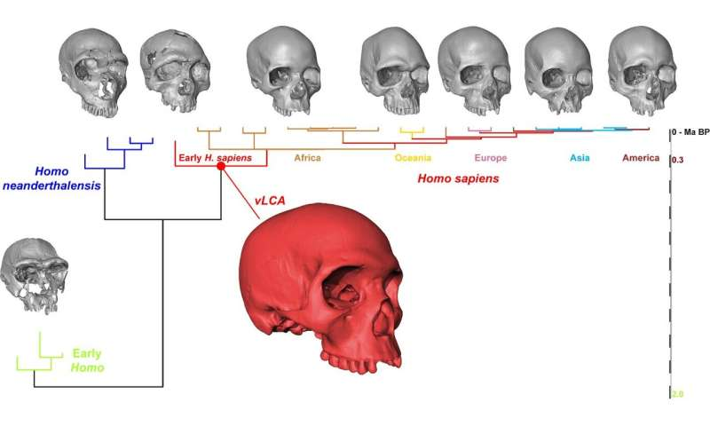 What the noggin of modern humans' ancestor would have looked like