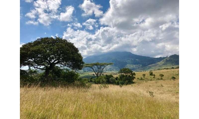 Cuando la plantación de árboles daña los ecosistemas