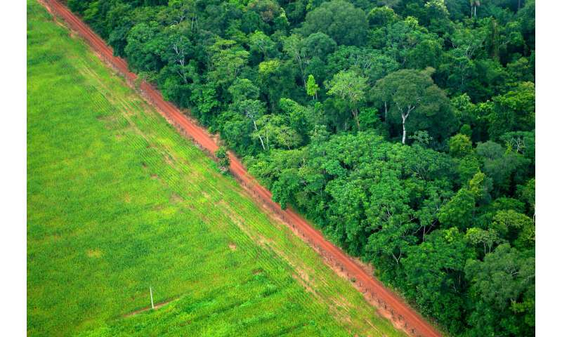 World's forests increasingly taking up more carbon
