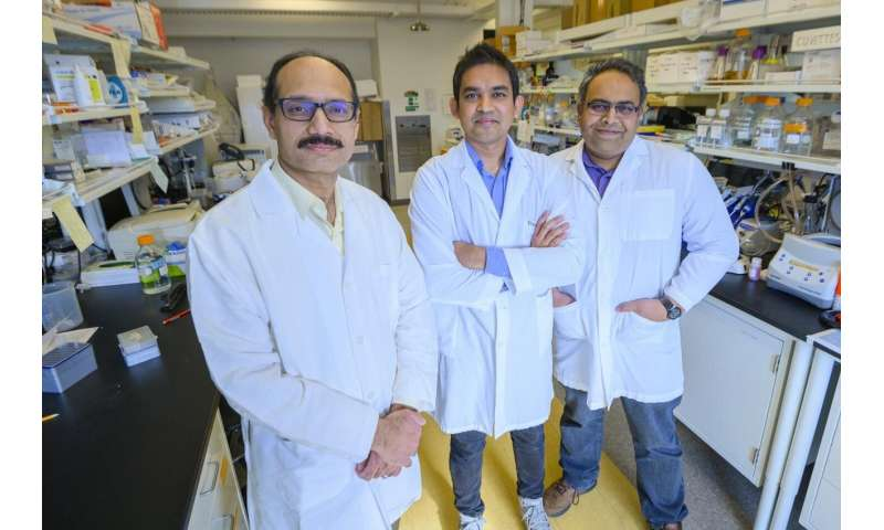 WSU study identifies potential new target for treatment of gout