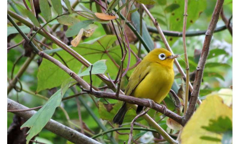 Zoologists discover two new bird species in Indonesia