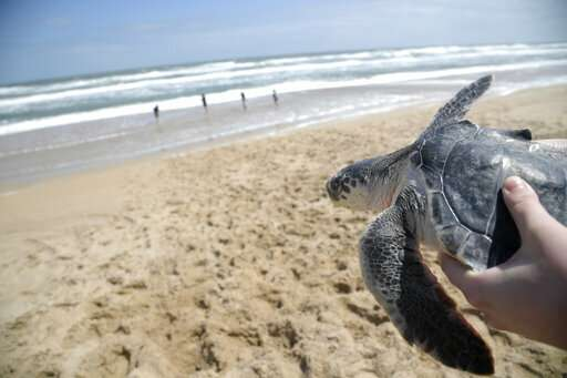 New England seeing a huge spike in beached sea turtles