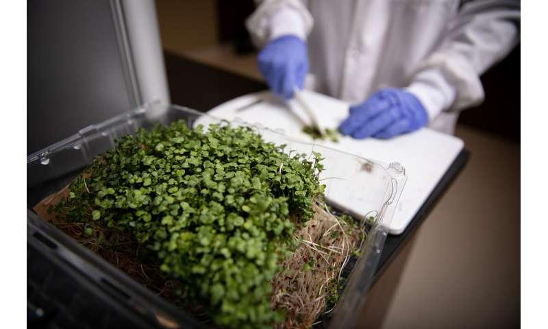 Researchers look to extend shelf life of nutritious vegetables