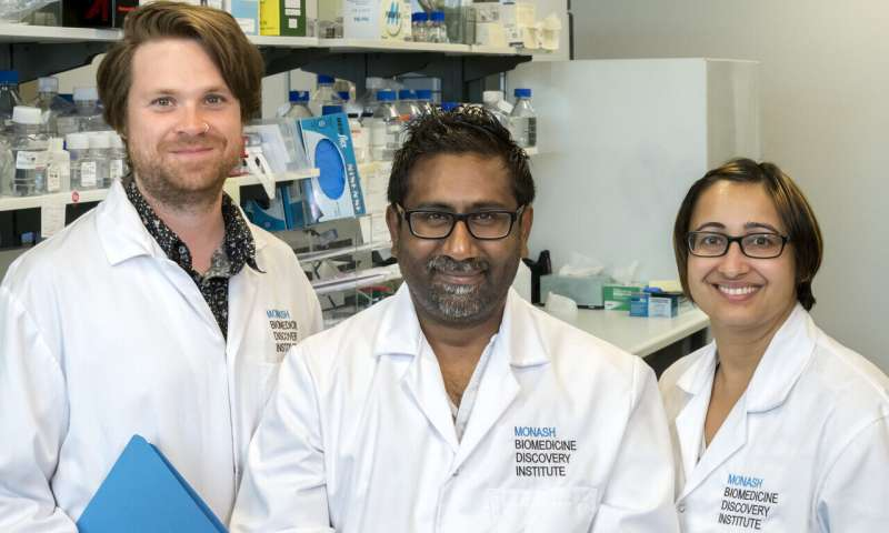 Study reveals factors behind embryonic stem cell state