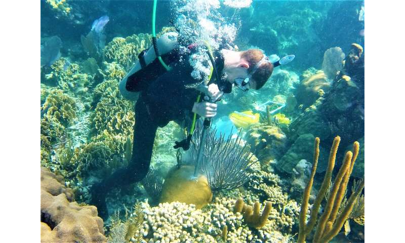 Climate change, human activity lead to nearshore coral growth decline