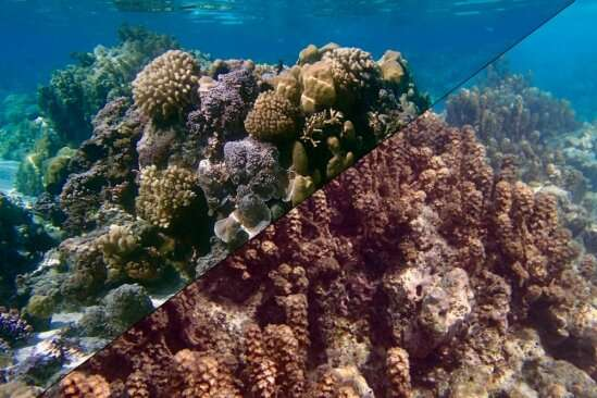 **Researchers show that tropical reefs can host coral or seaweed communities under the same conditions