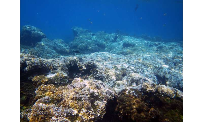 New research finds ocean warming forces reefs into cool-water refuges
