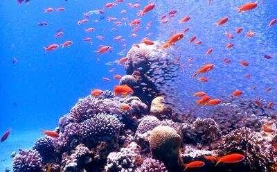 Study shows how vital coral algae adapts to warming seas