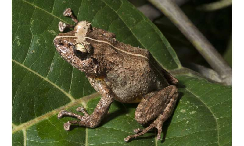 Scientists track frog-killing fungus to help curb its spread