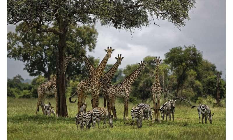 UN report: Humans accelerating extinction of species