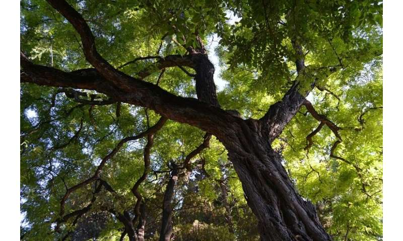 Air pollution affects tree growth in Sao Paulo