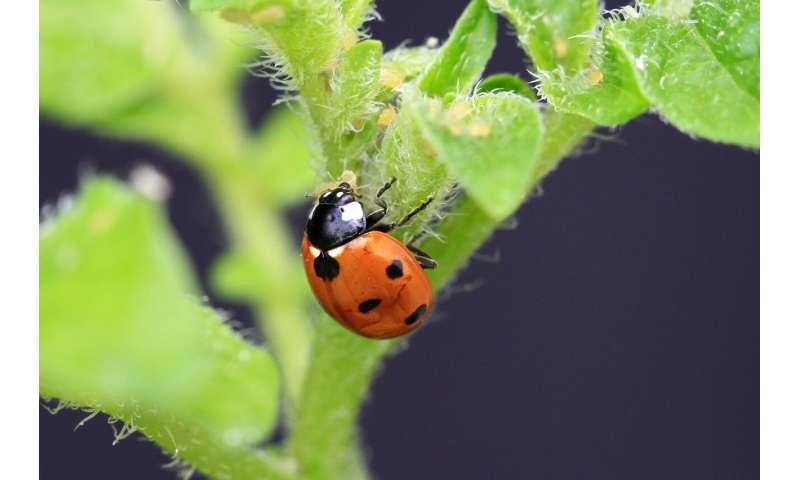 Biodiversity improves crop production