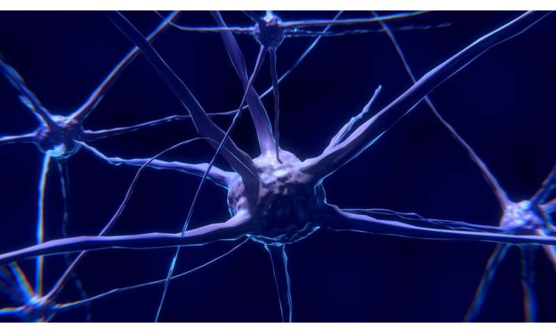 Discovery of a new key player in long-term memory