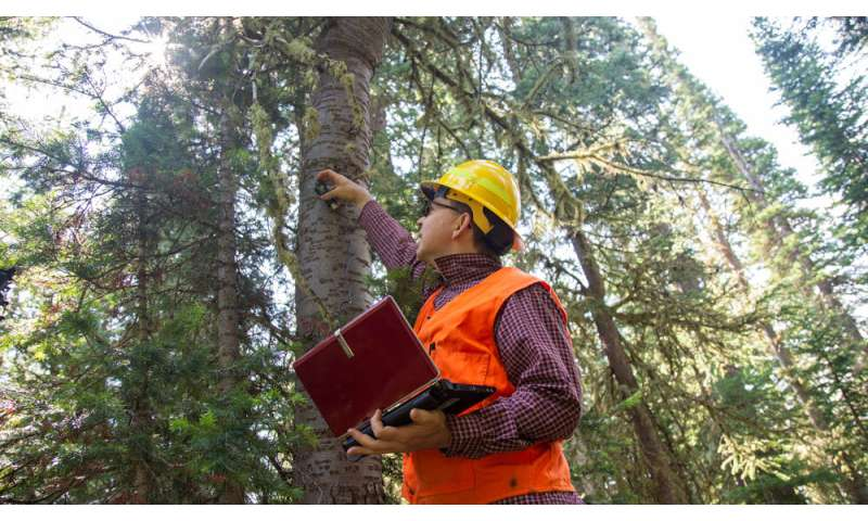 New research shows importance of climate on spruce beetle flight