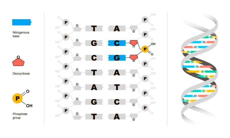 Researchers explain signals of CpG 'traffic lights' in DNA