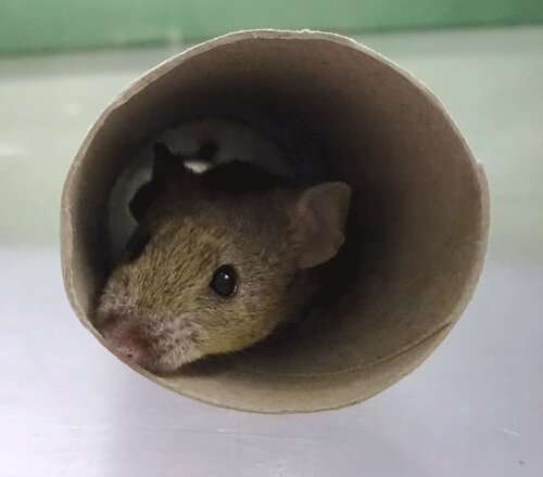 **Scientists map mouse personality