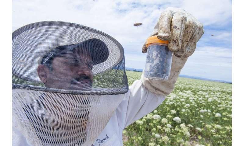 Researchers determine pollen abundance and diversity in five major pollinator-dependent crops