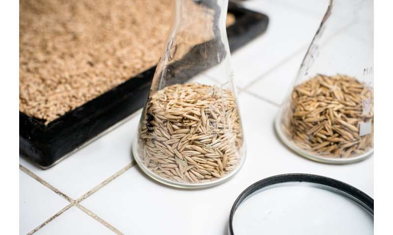 Scientists Create Chia Seed Bread Recipe for Healthy Eating