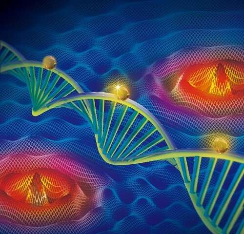 Researchers develop new interferometric single-molecule localization microscopy