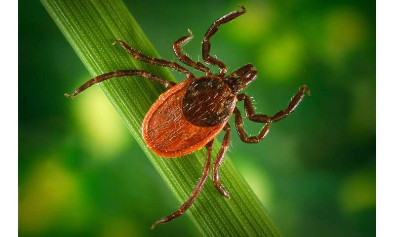 Climate change driving expansion of Lyme disease in the US