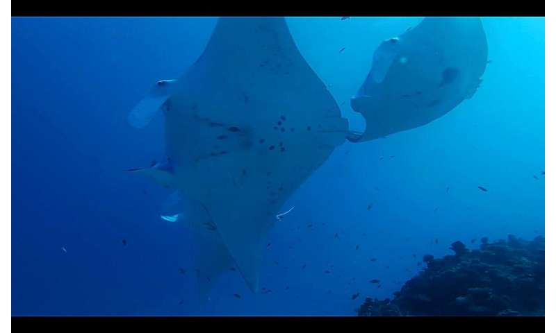 Citizen scientists offer ray of hope