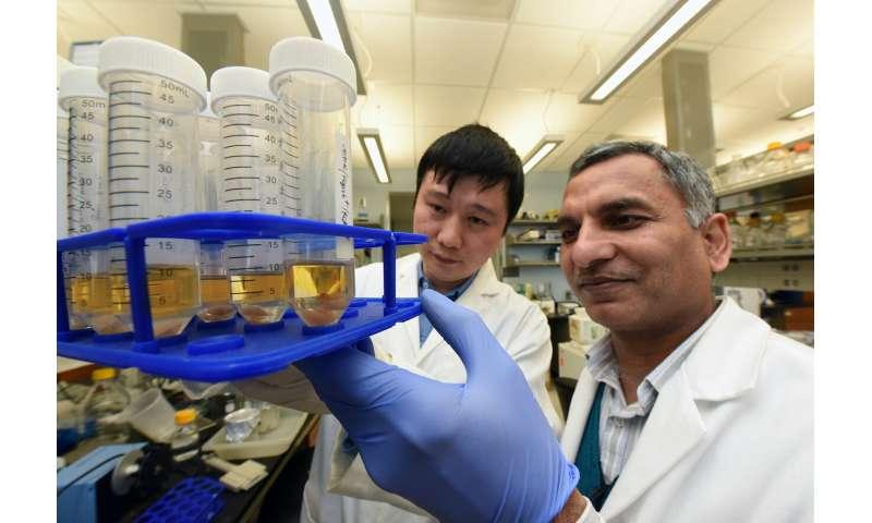 Scientists delineate pathway that helps us make antibodies