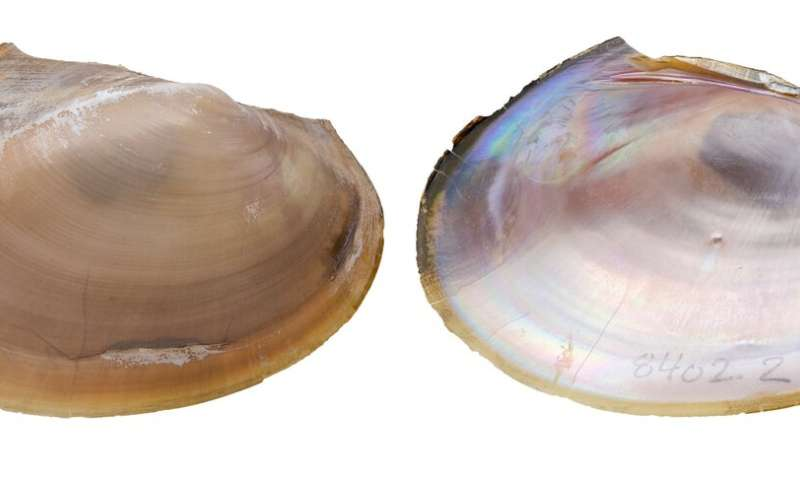 Newly discovered mussels may help refocus conservation efforts in Texas