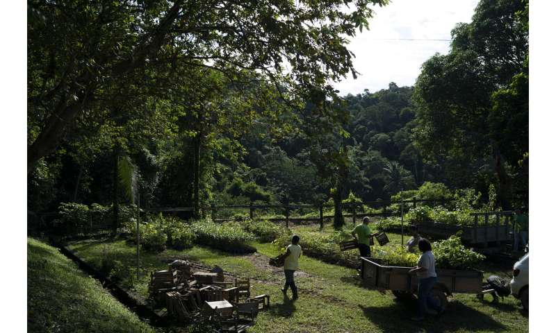 Restoring forests 1 tree at a time, to help repair climate