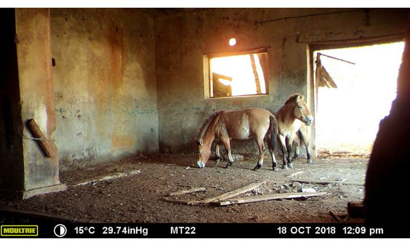 Abandoned Chernobyl villages could save a rare species