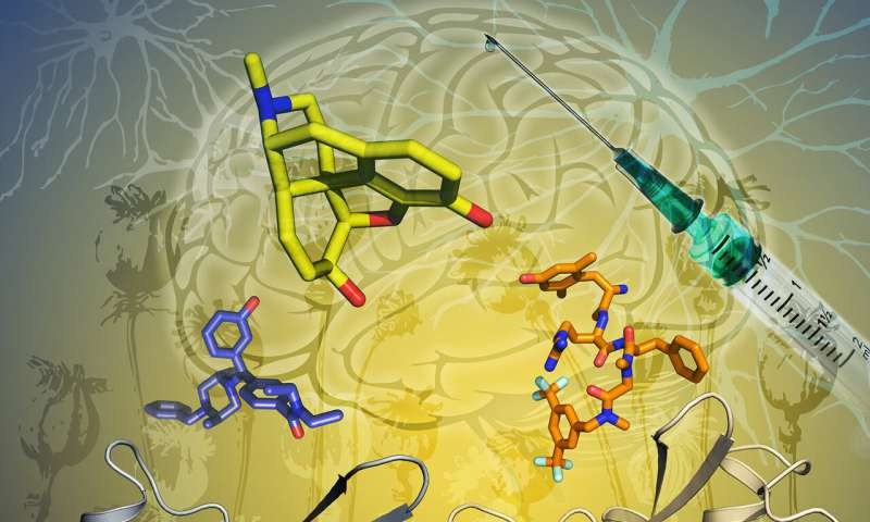 Activation of opioid receptor uncovered