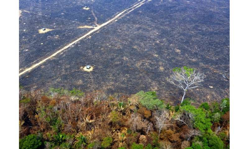Aerial view of burnt areas of the Amazon rainforest near Porto Velho, in Rondonia state