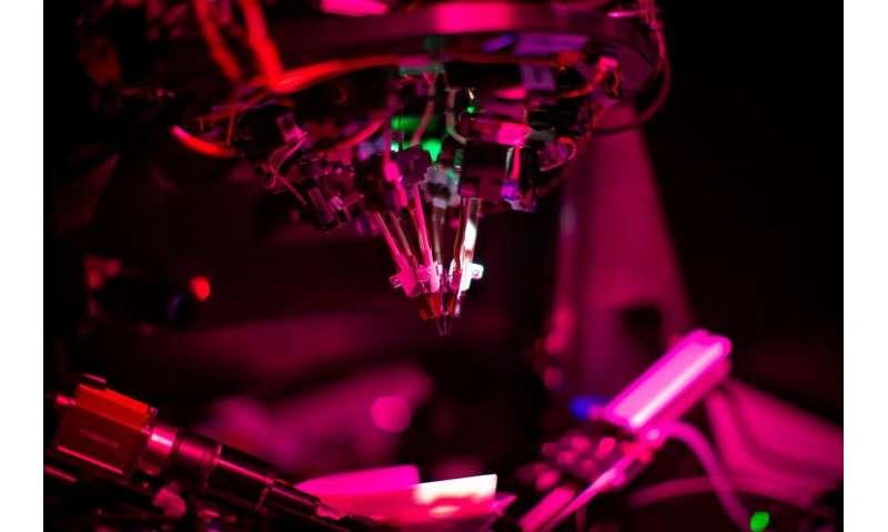 Allen Institute debuts new window into brain cell communication