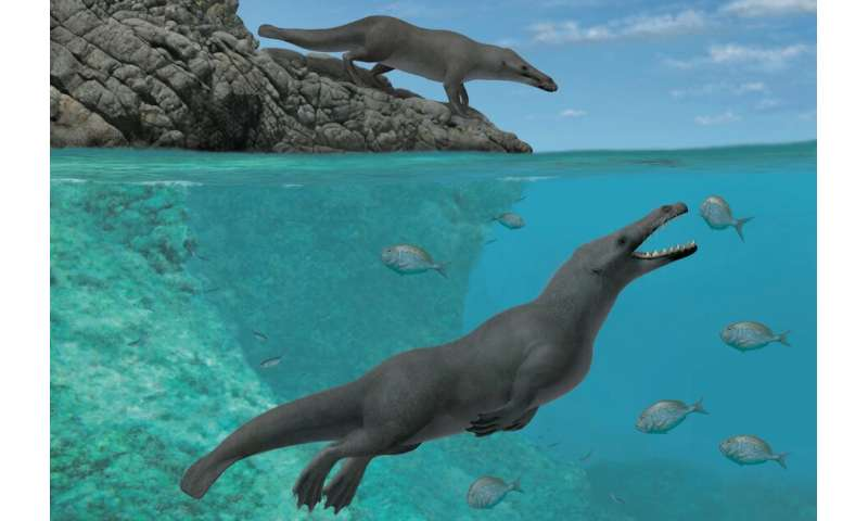 Ancient four-legged whales once roamed land and sea