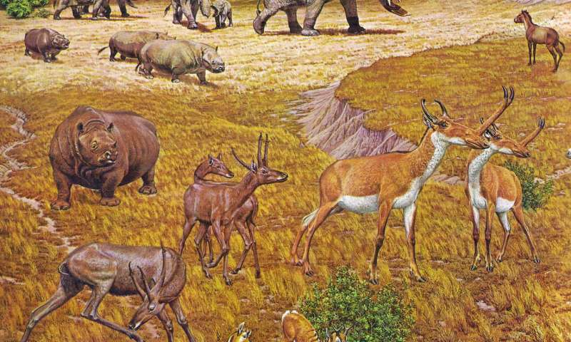 Ancient 'Texas Serengeti' had elephant-like animals, rhinos, alligators and more