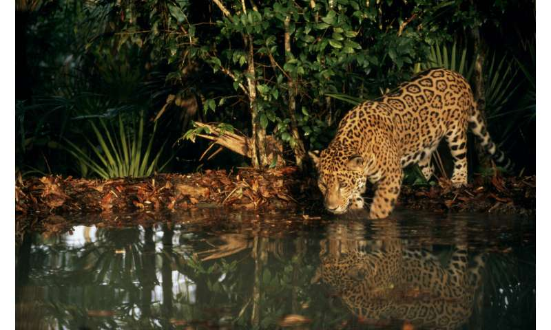 A new study reveals the Amazon is losing surface water