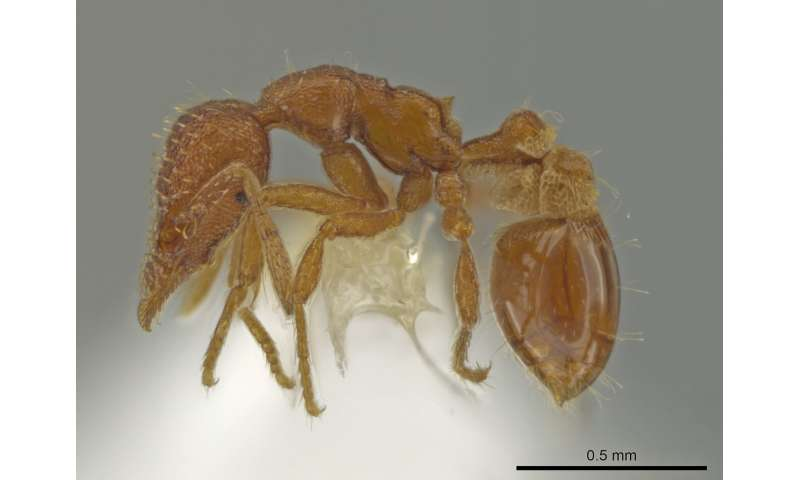 Ant expert discovers newly emergent species in his backyard