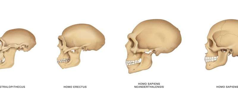 A snapshot of our mysterious ancestor Homo erectus