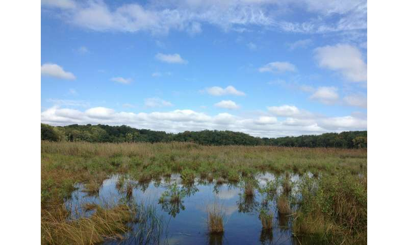 As sea level rises, wetlands crank up their carbon storage