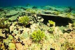 Back-to-back heatwaves kill more than two-thirds of coral