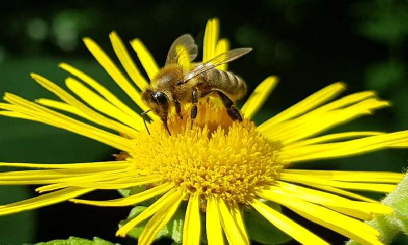 Bees can learn higher numbers than we thought – if we train them the right way