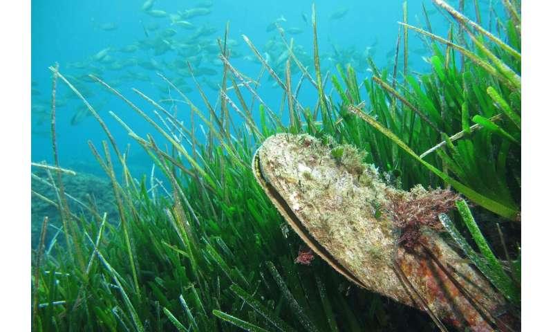 Biodiversity loss in the oceans can be reversed through habitat restoration